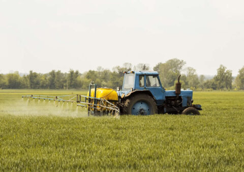 Freeze Concern Hits Your Wheat Farms